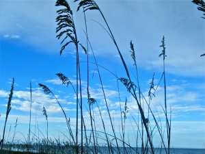 Singing with Sea Oats!