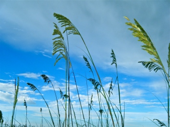 Laughing with Sea Oats